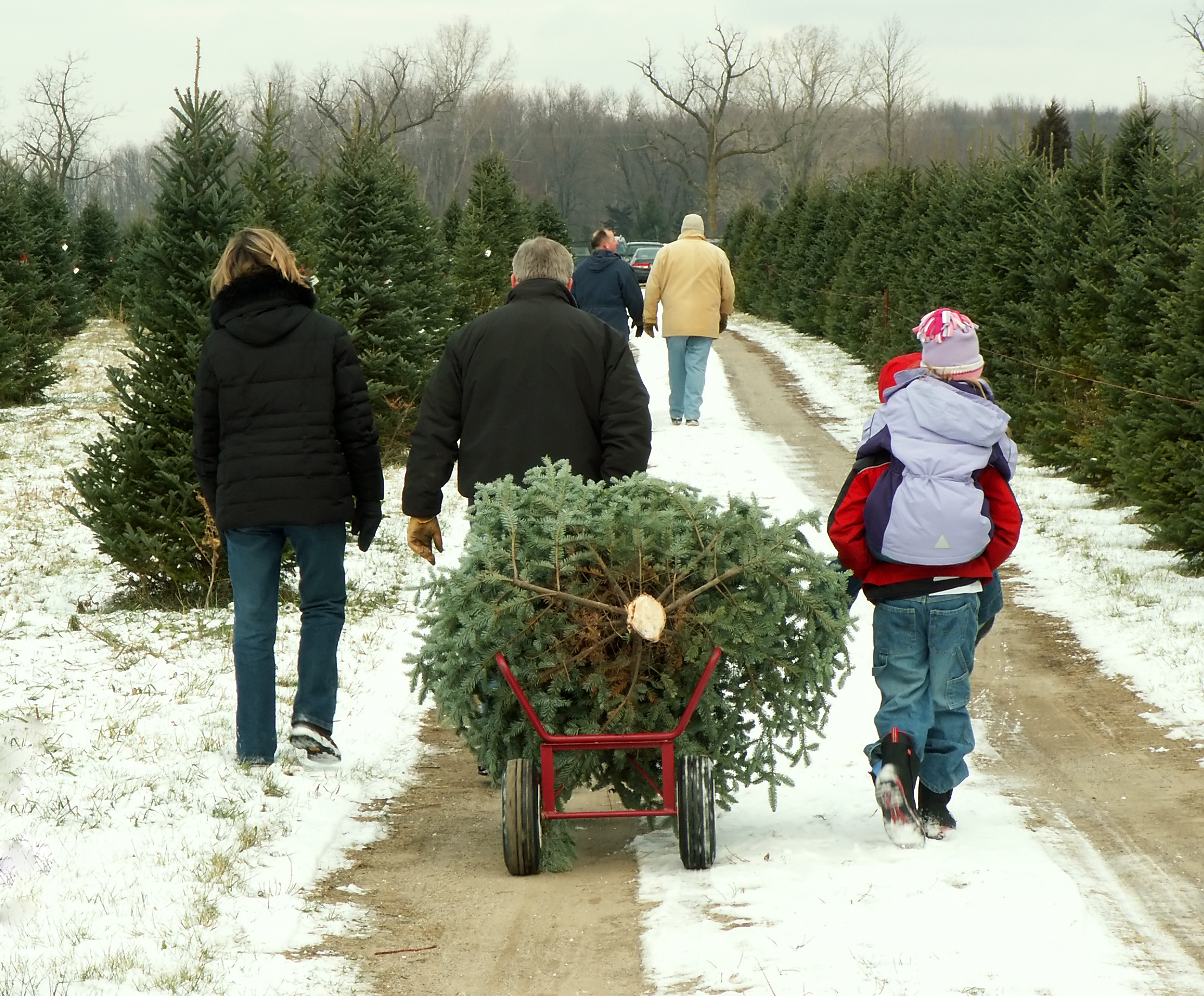 Christmas - tree cutting family.