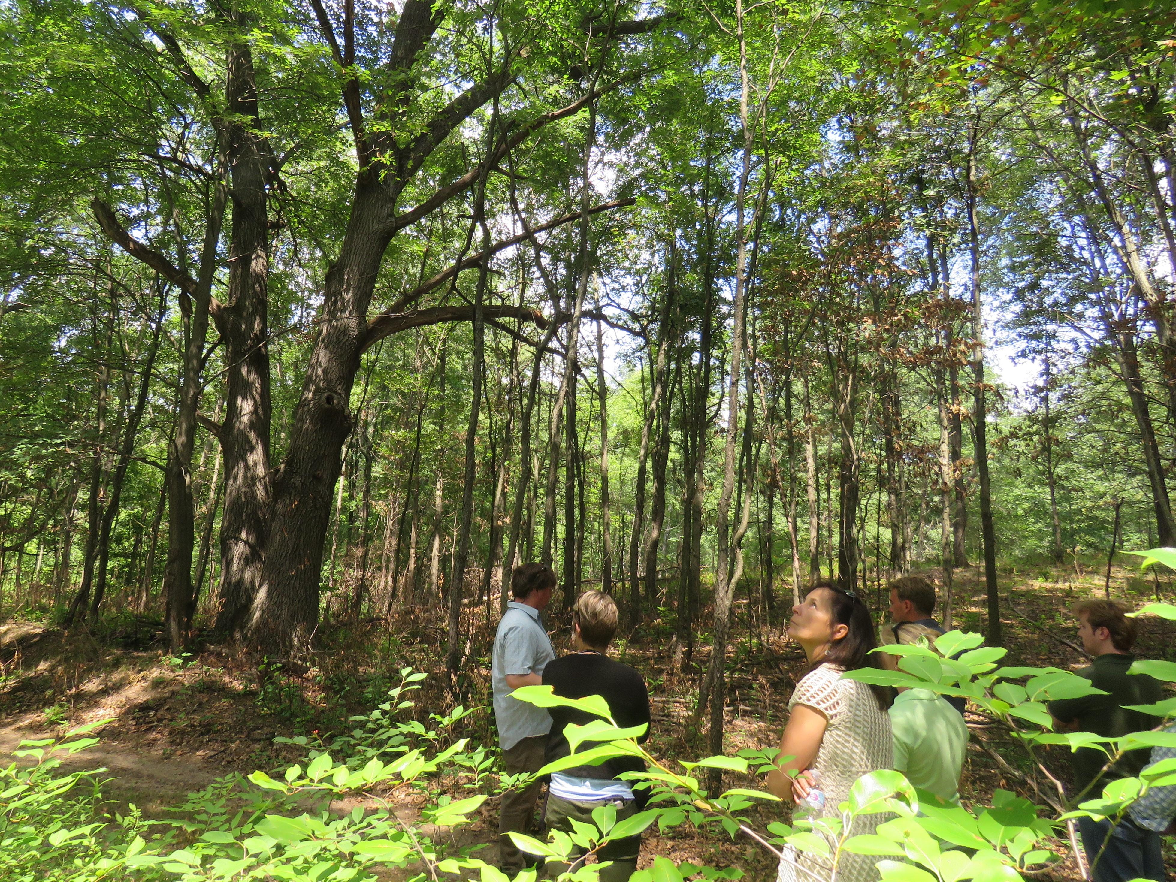 Shiawassee Basin Preserve