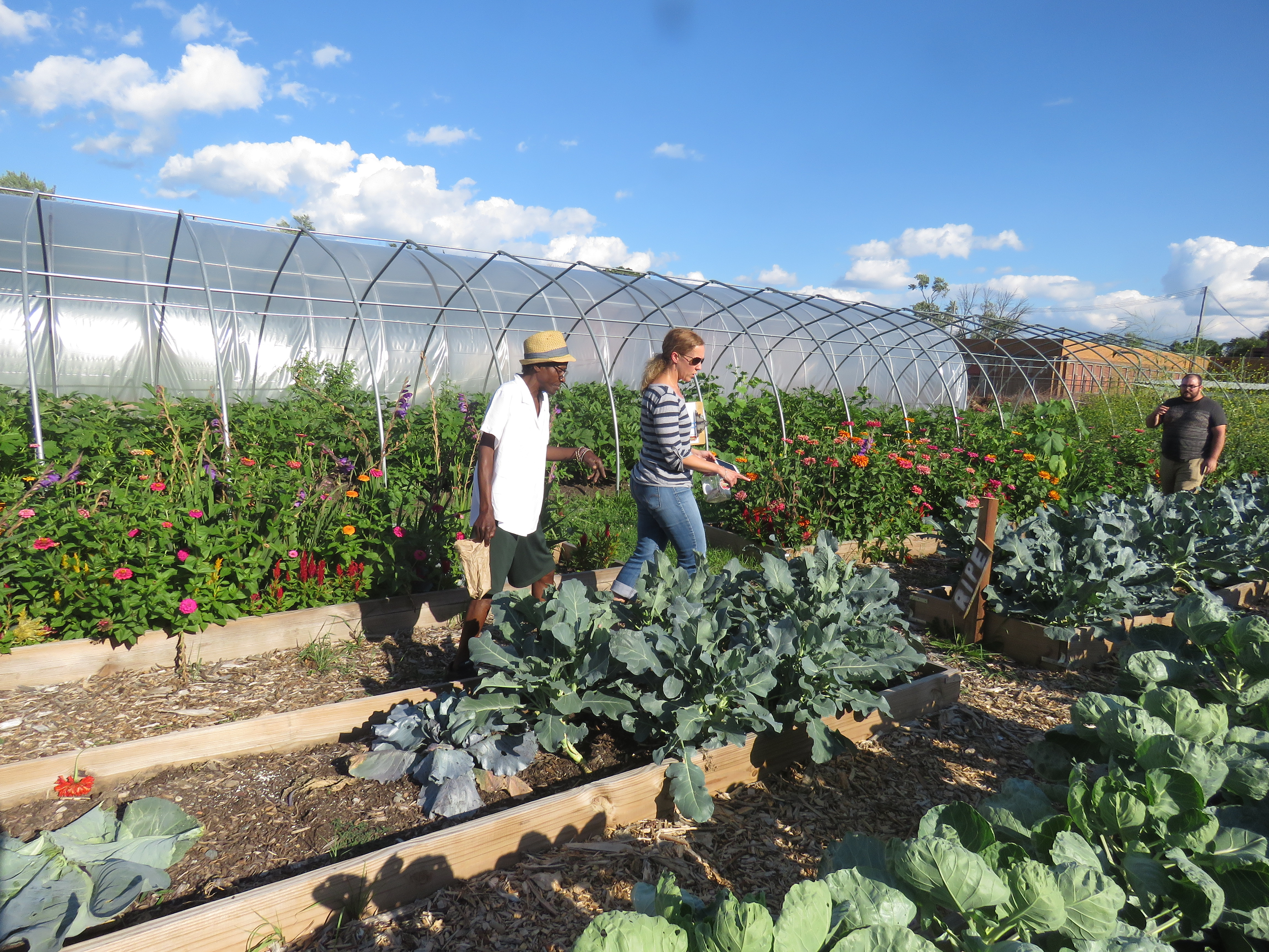 A man and woman walk through plots in a community garden. The sky above is blue with puffy clouds.