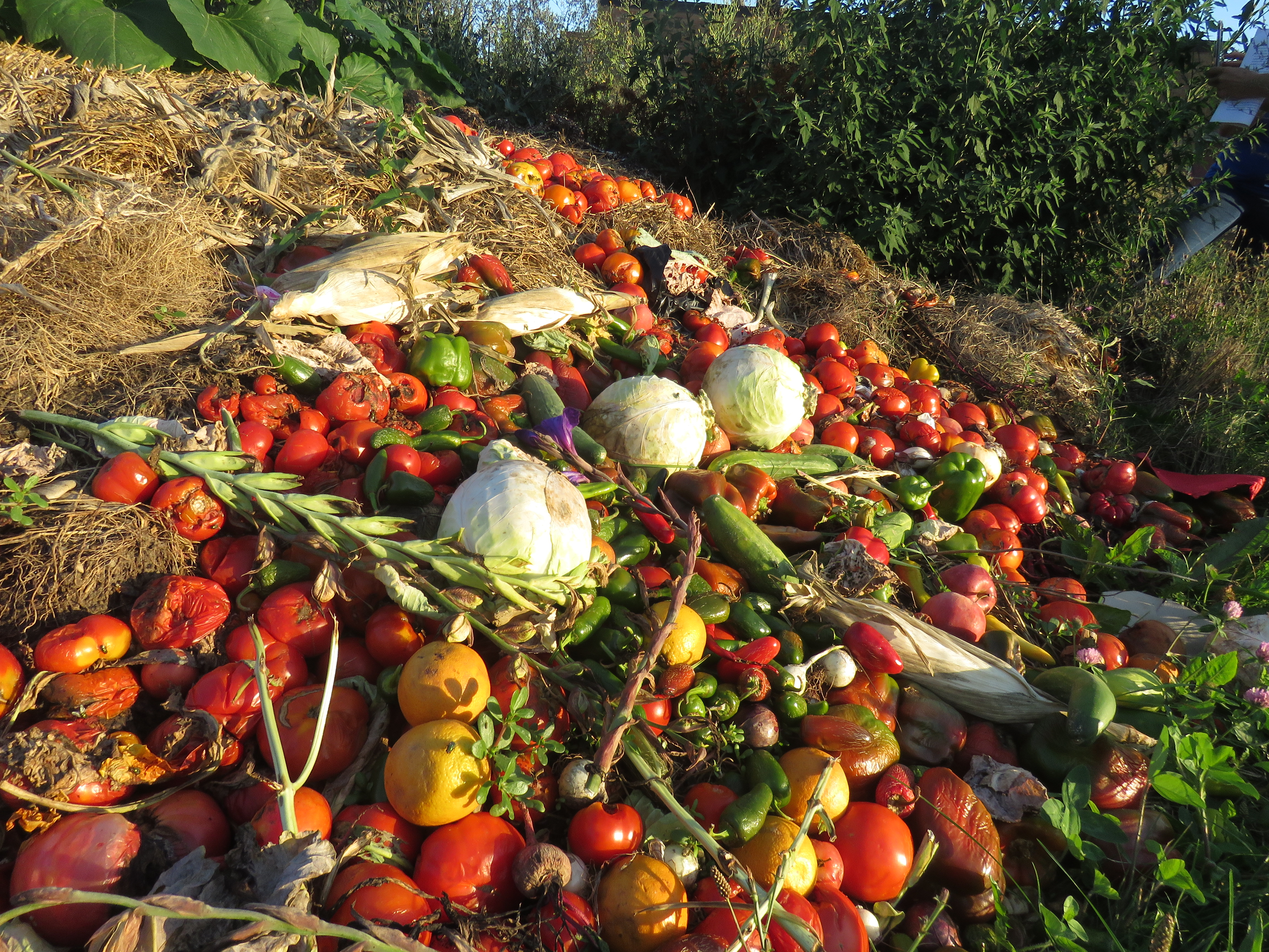 A heap of crops containing tomatoes, cabbage, peppers, corn, cucumbers are gathered on a pile of hay.