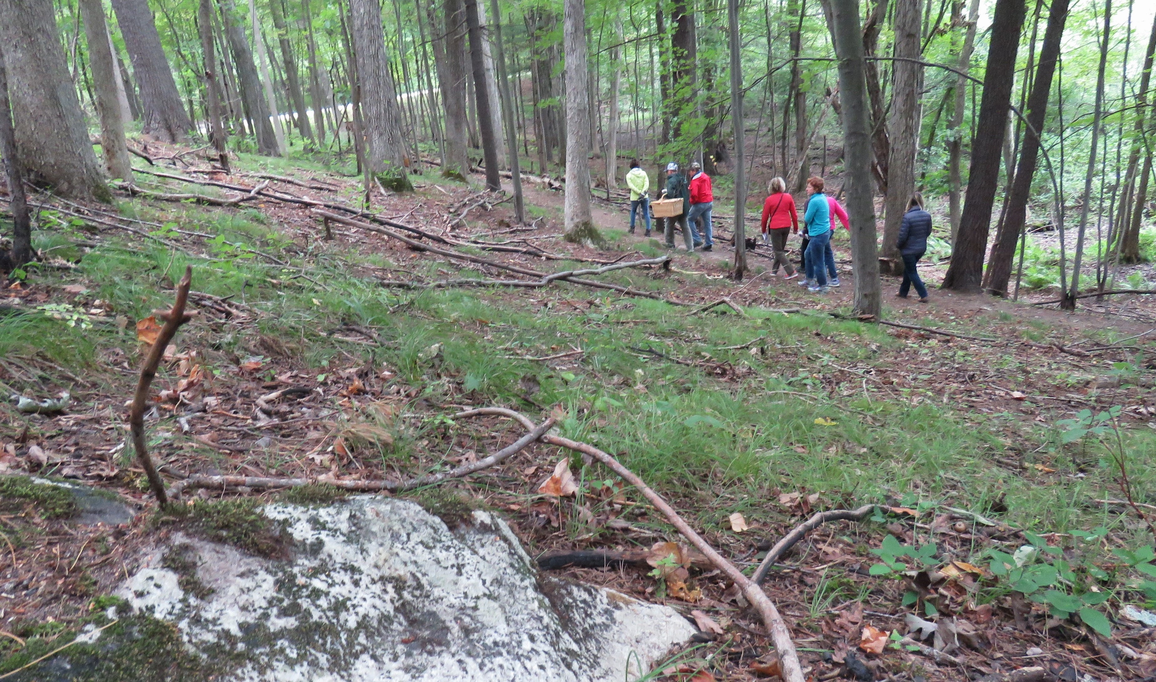 A group of people walk along a trail foraging for mushrooms on an overcast day.