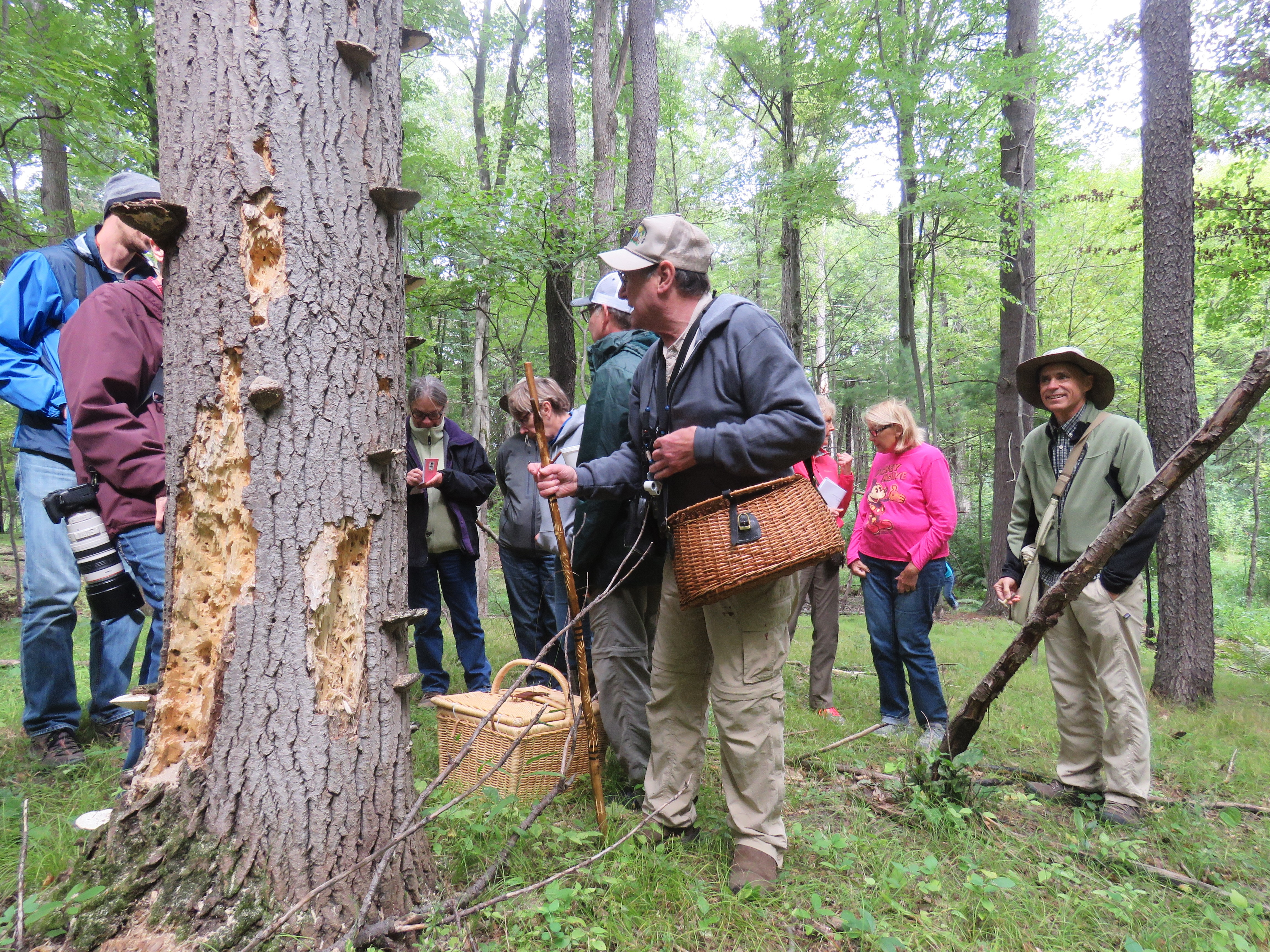 A group of mushroom foragers gather around a tree in the woods.