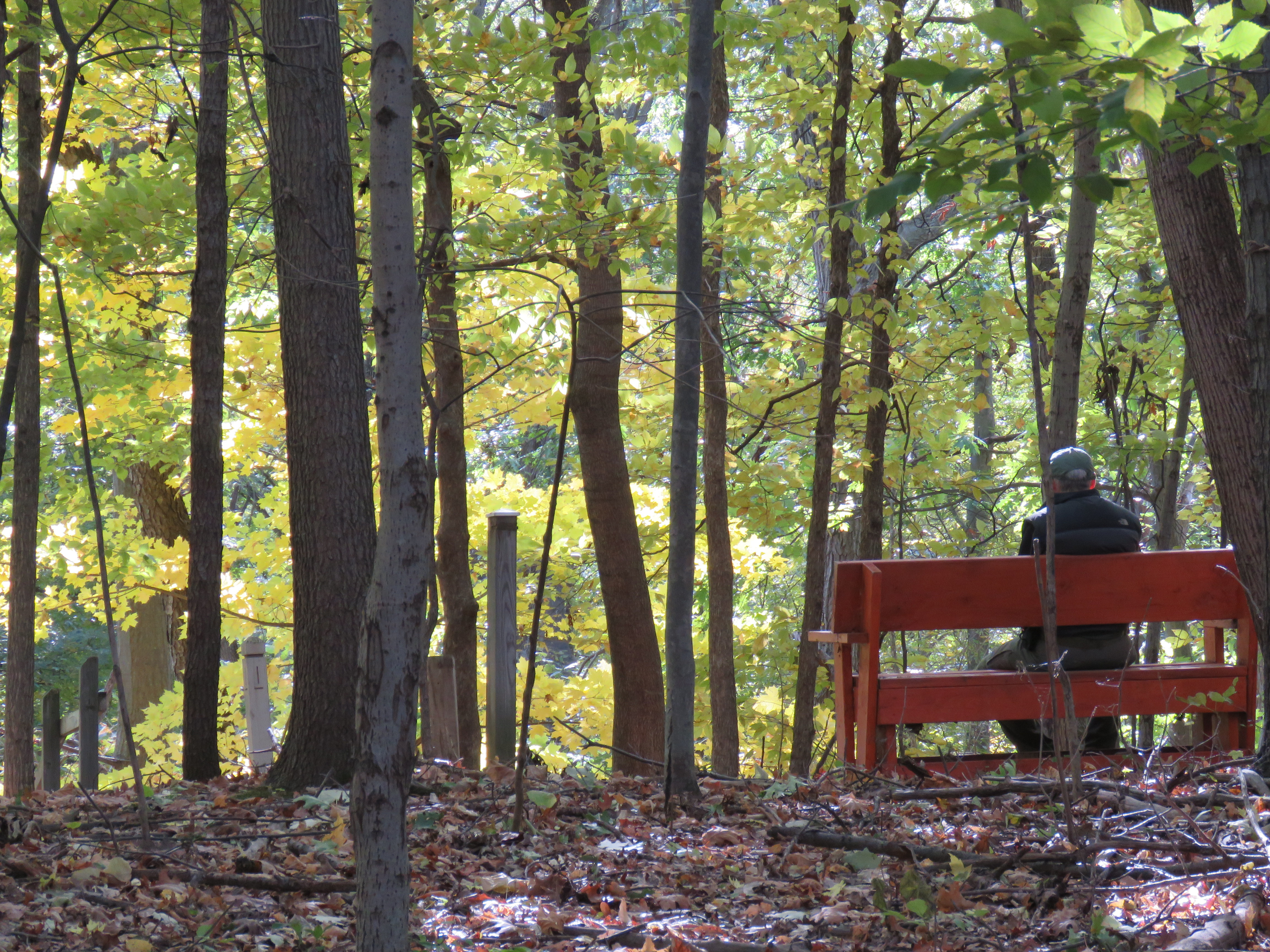 A man resting on bench in a wooded area at the top of a moraine.