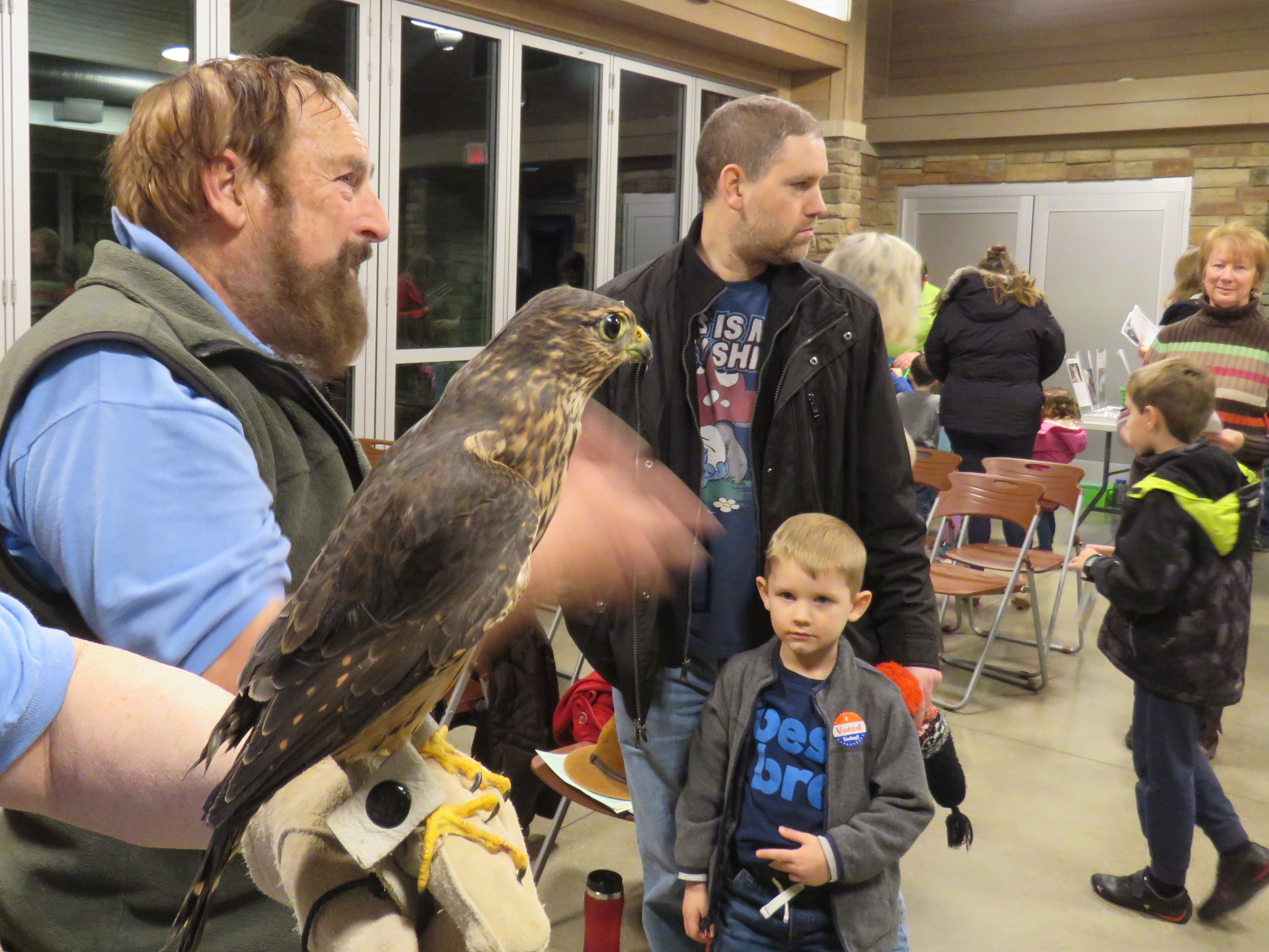 A Merlin is perched on a man's gloved hand. A young boy looks up at the merlin, who is dark brown in color with heavy, dark streaking.