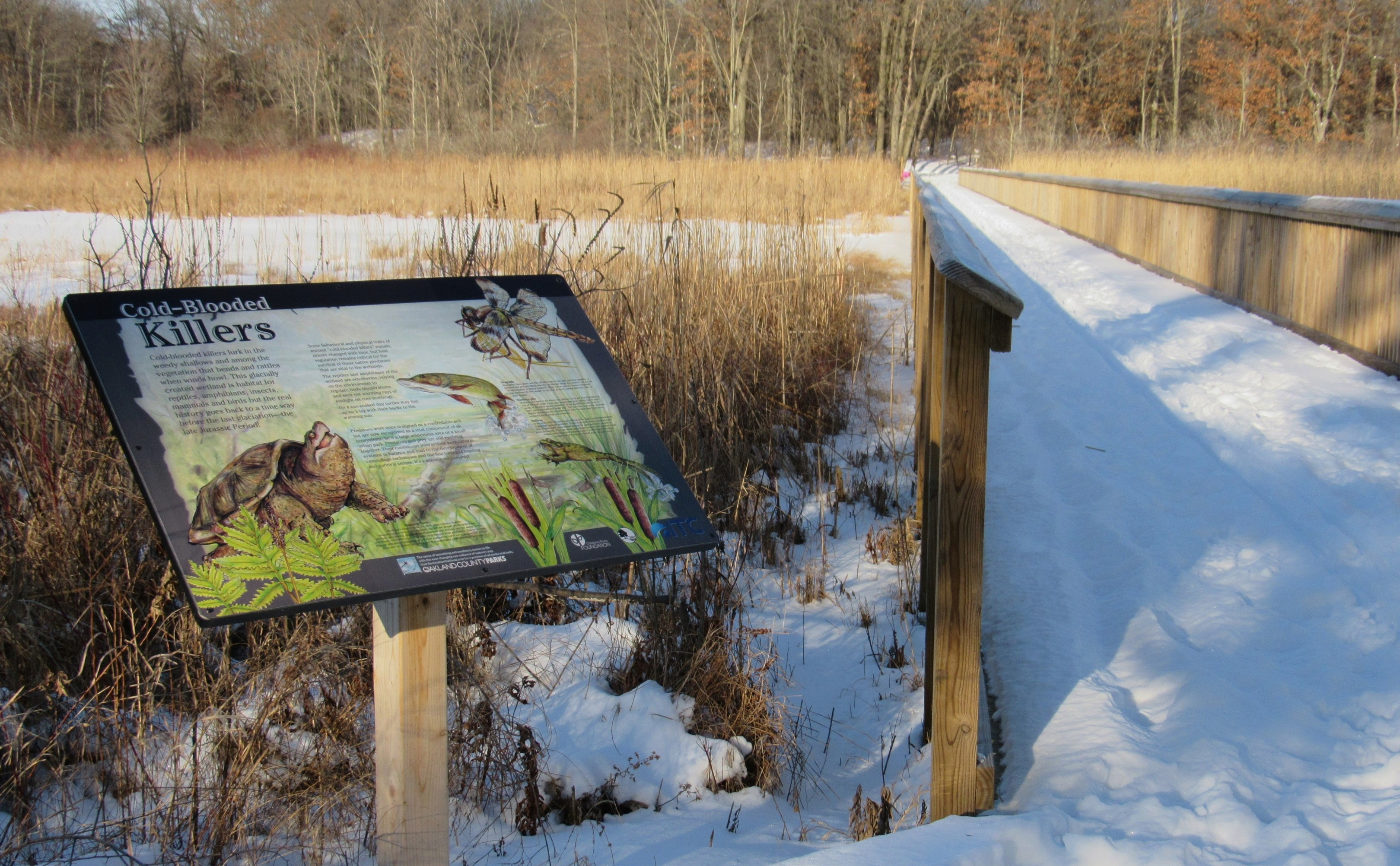 An interpretive sign next to a large boardwalk over wetland that is covered by snow.