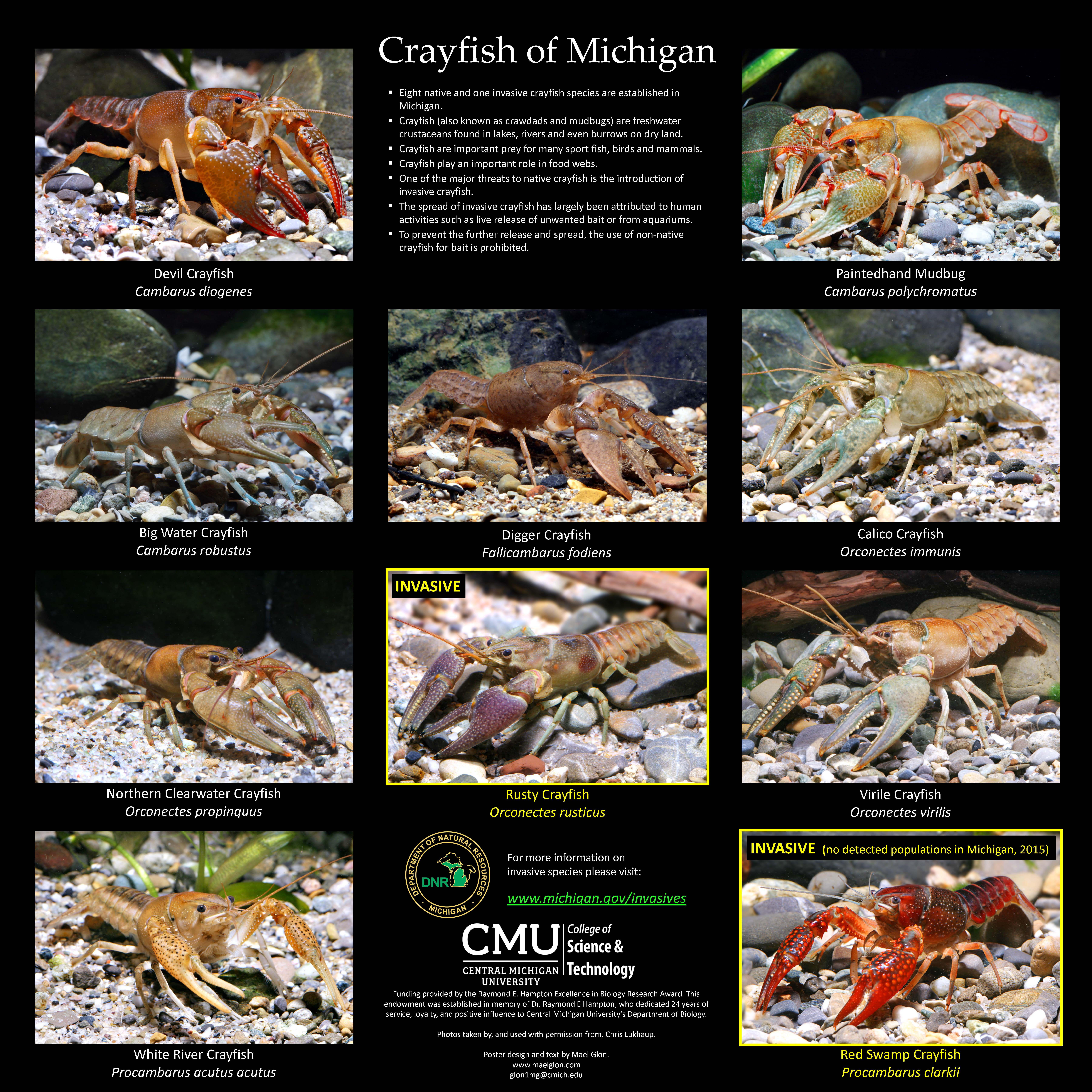 Michigan Department of Natural Resources Crayfish of Michigan Poster