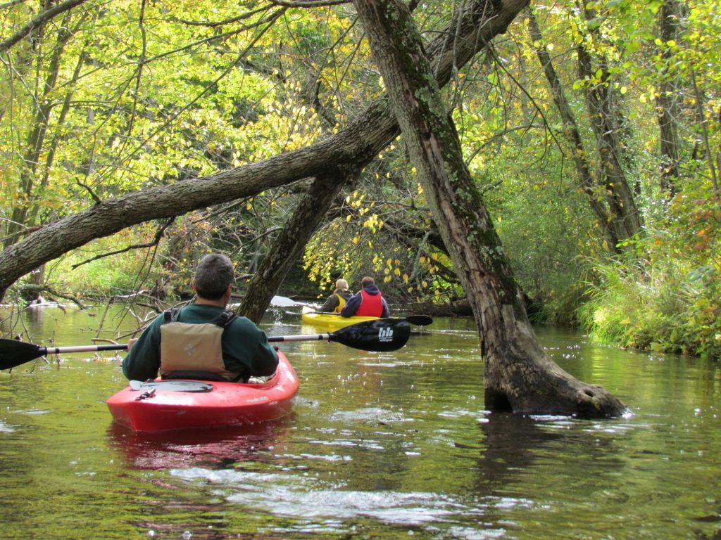 Man kayaking under tree