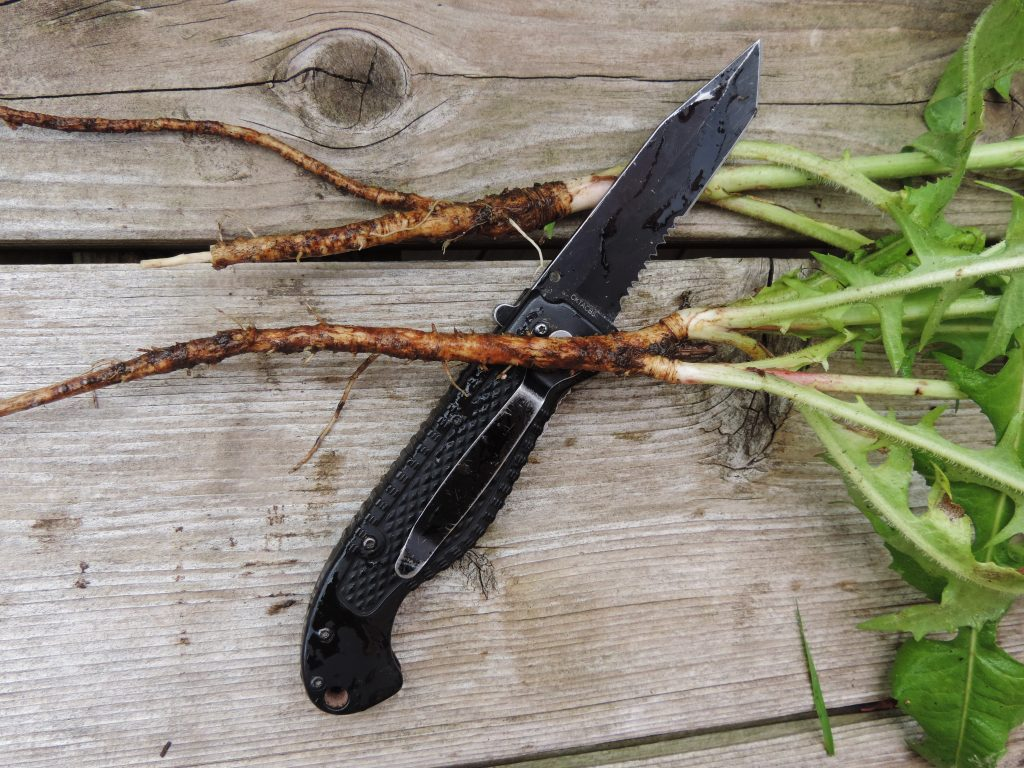 Chicory root and knife