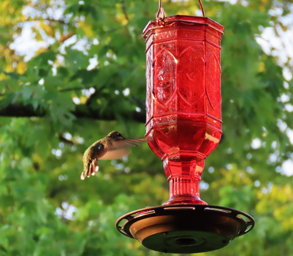 hummingbird and bright red feeder