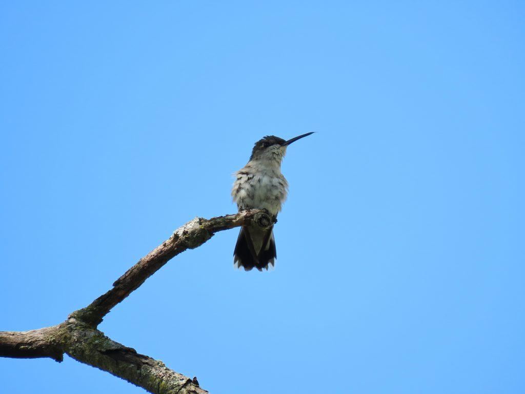 a hummingbird on stick with blue sky