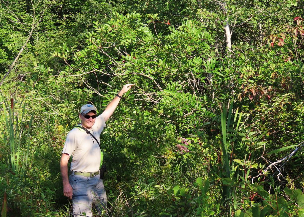 man next to 12 foot sumac