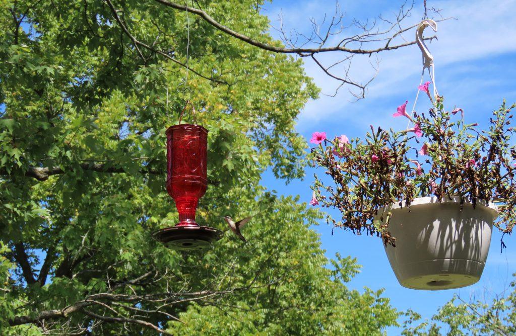 trees and hummingbird feeder
