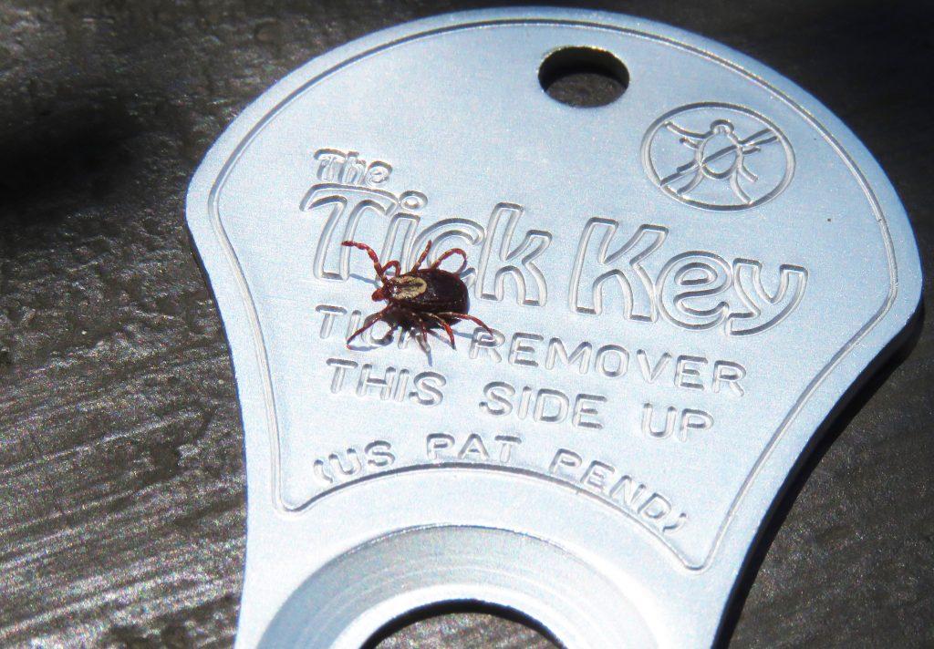 dog tick on key
