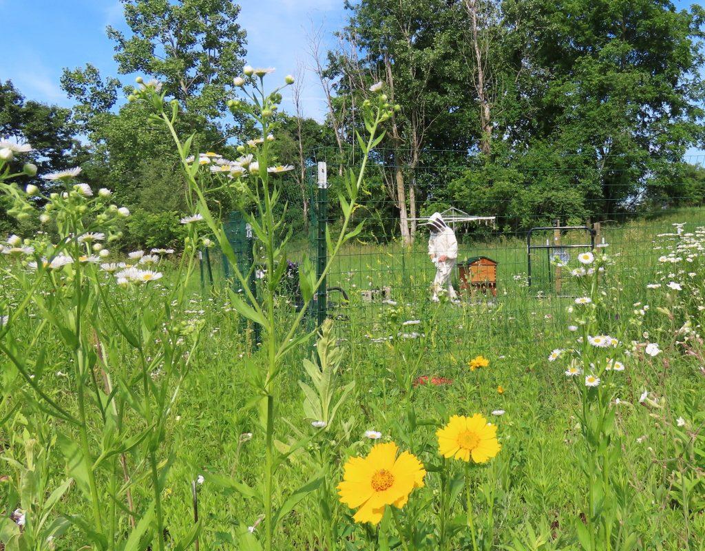a bee yard