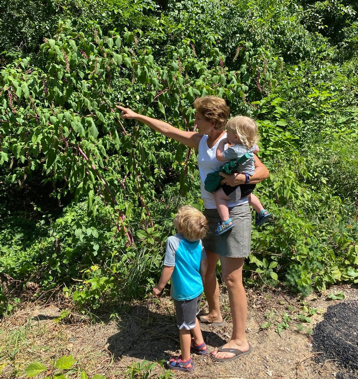 family pointing at pokeweed