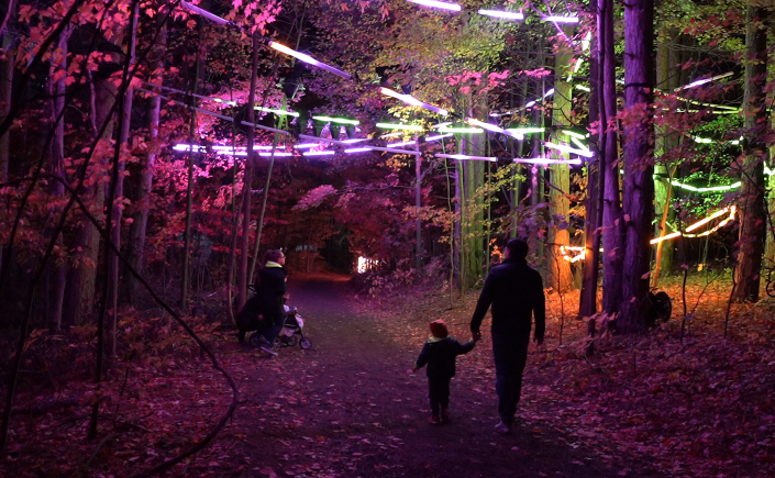 interactive forest lights