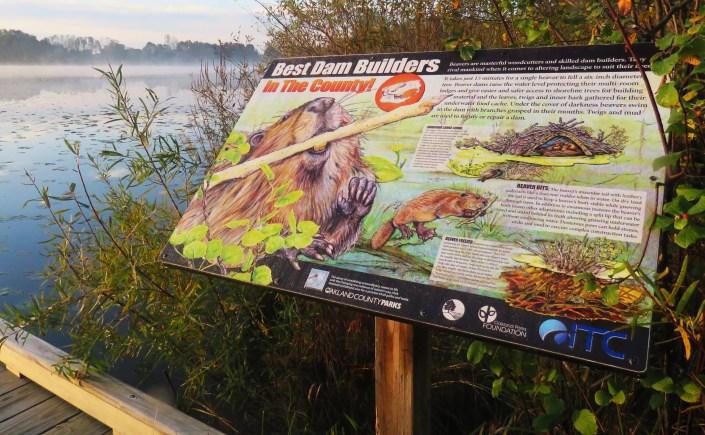 beaver habitat sign