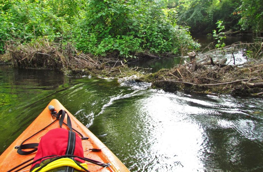 kayakers view of beaver dam