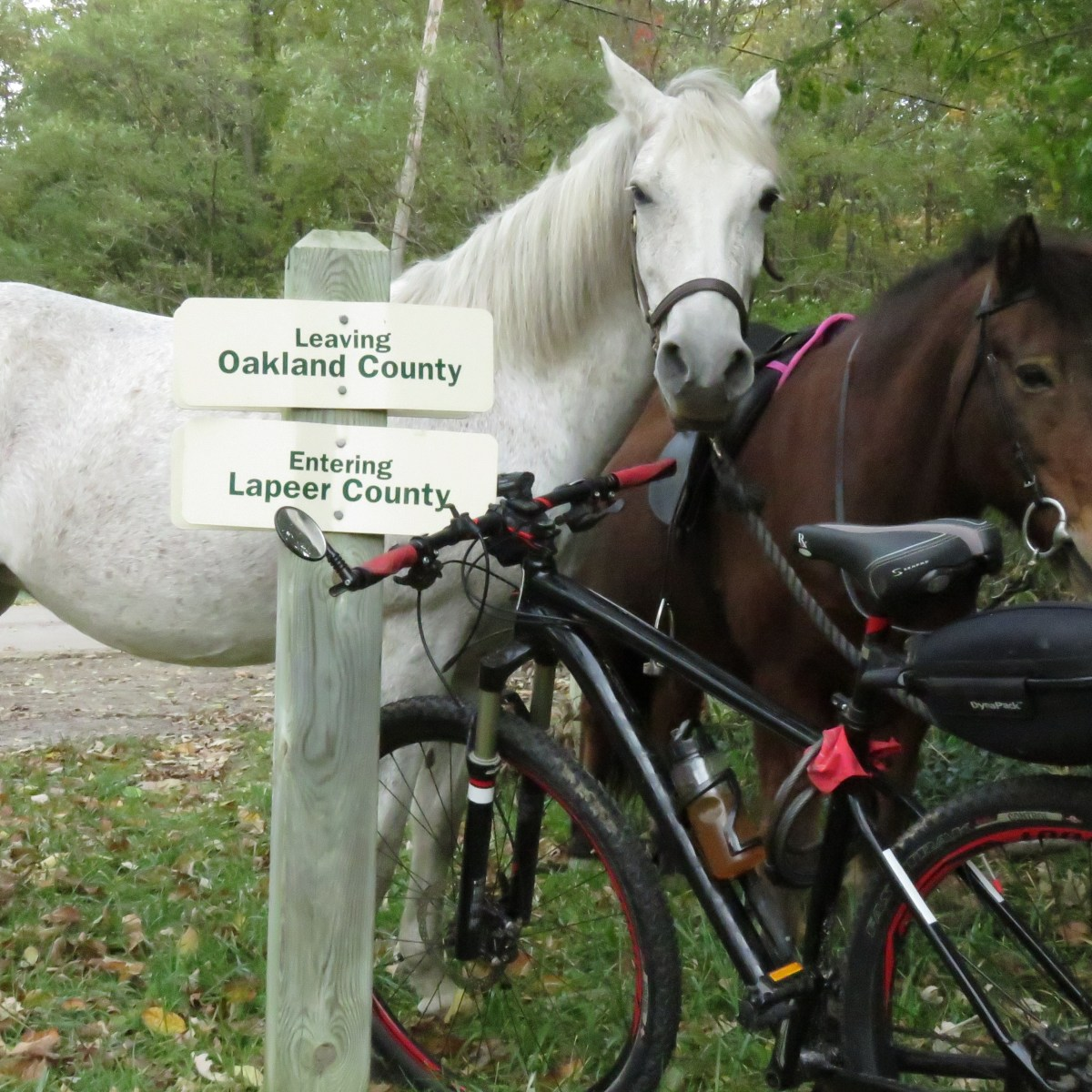 A white and a dark brown horse stand next to two signs on a post at the Oakland/Lapeer County Lines