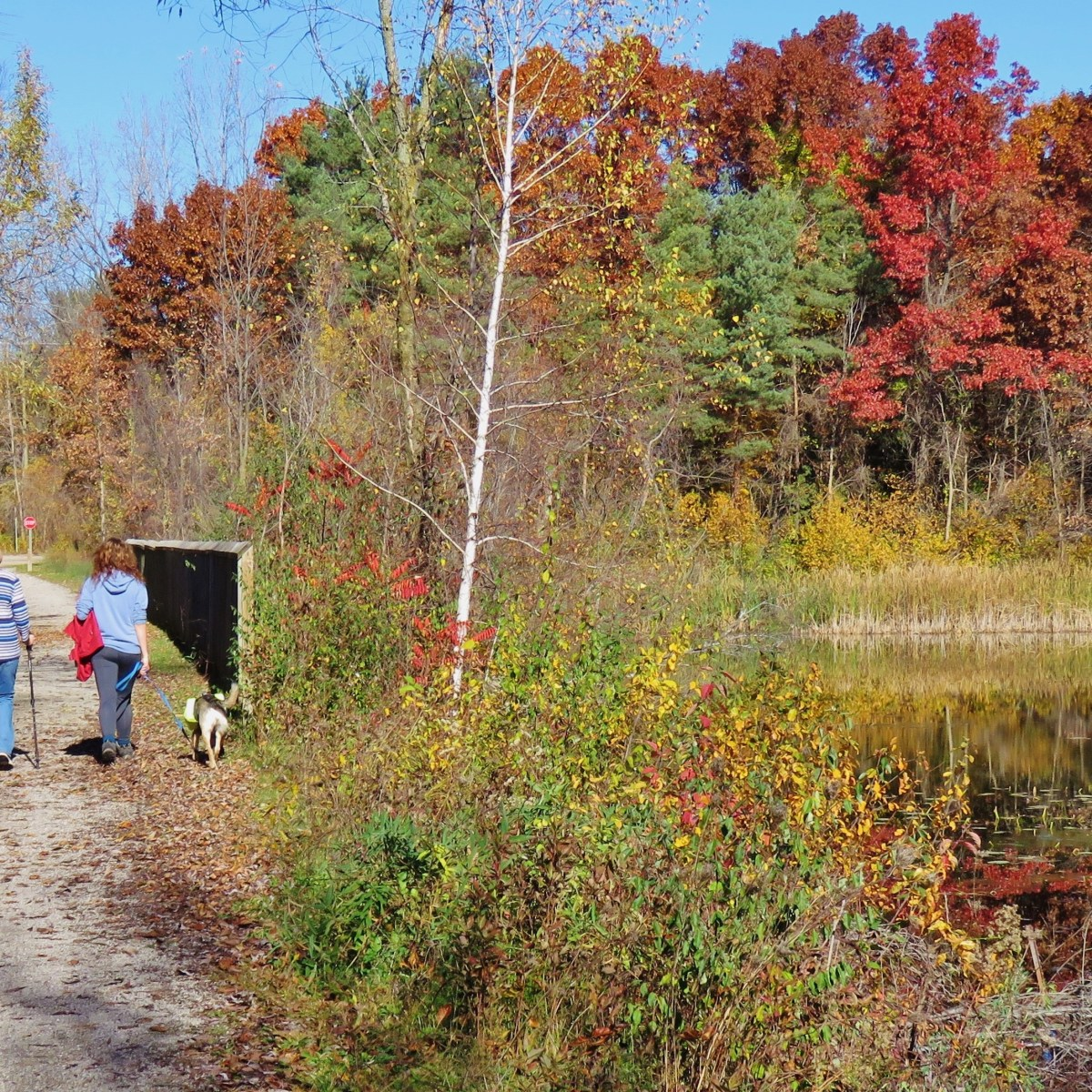 Three women and a dog hike along a trail as surrounded by autumn-colored leaves