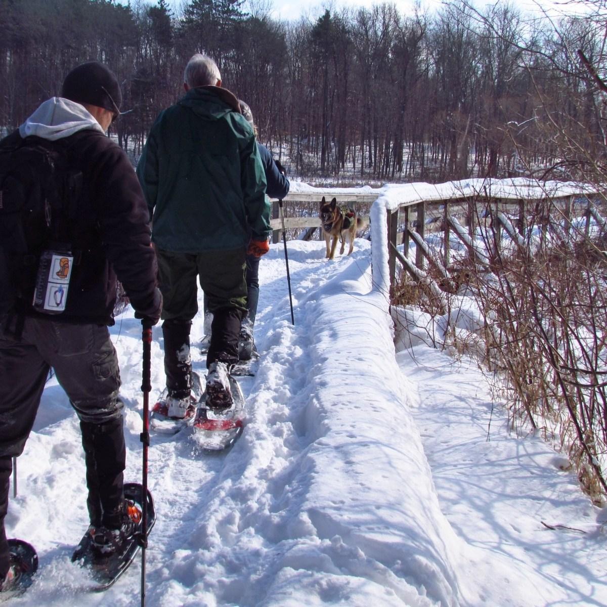 Men snowshoeing with a German Shepherd