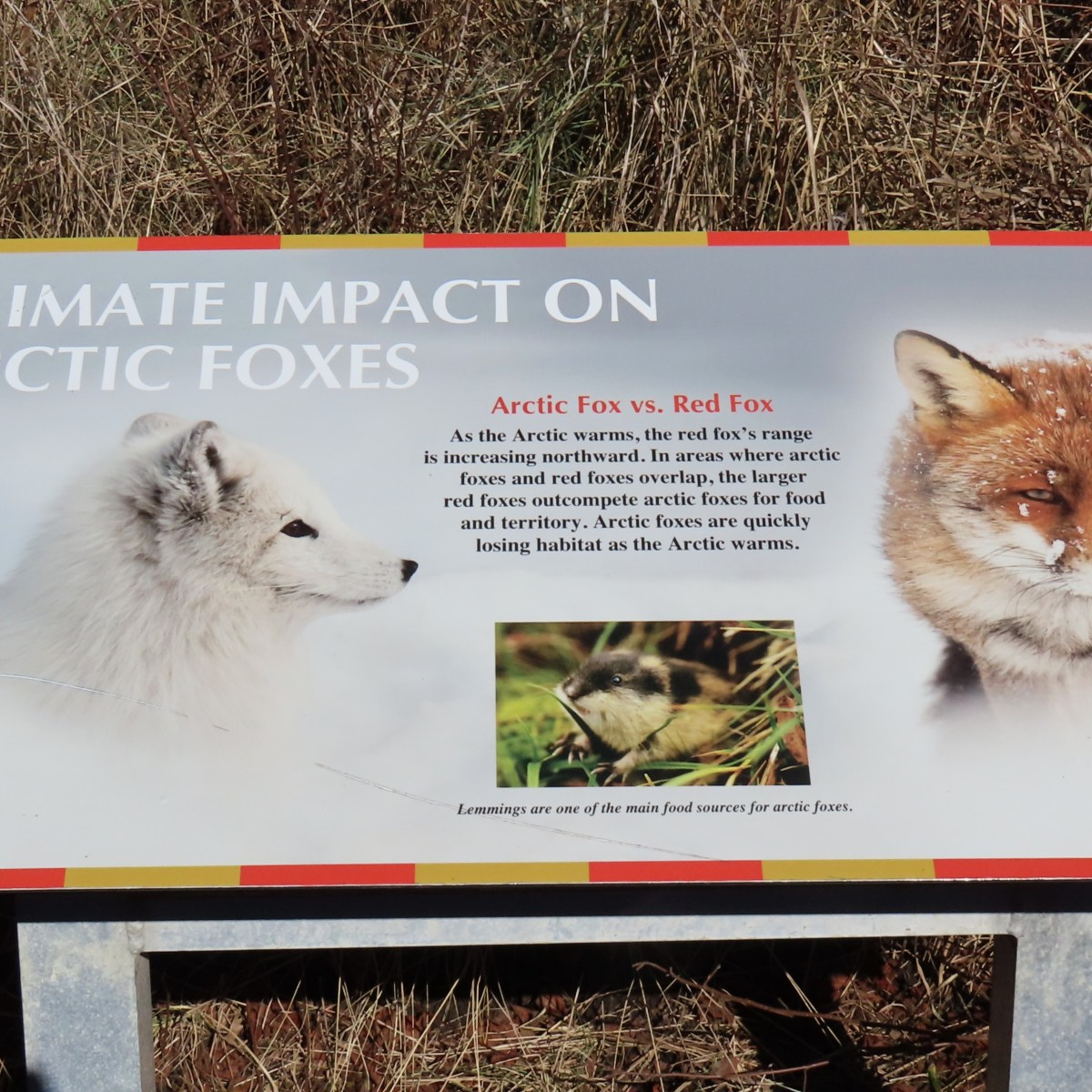An outdoor interpretive sign detailing Climate Impact on Arctic Foxes