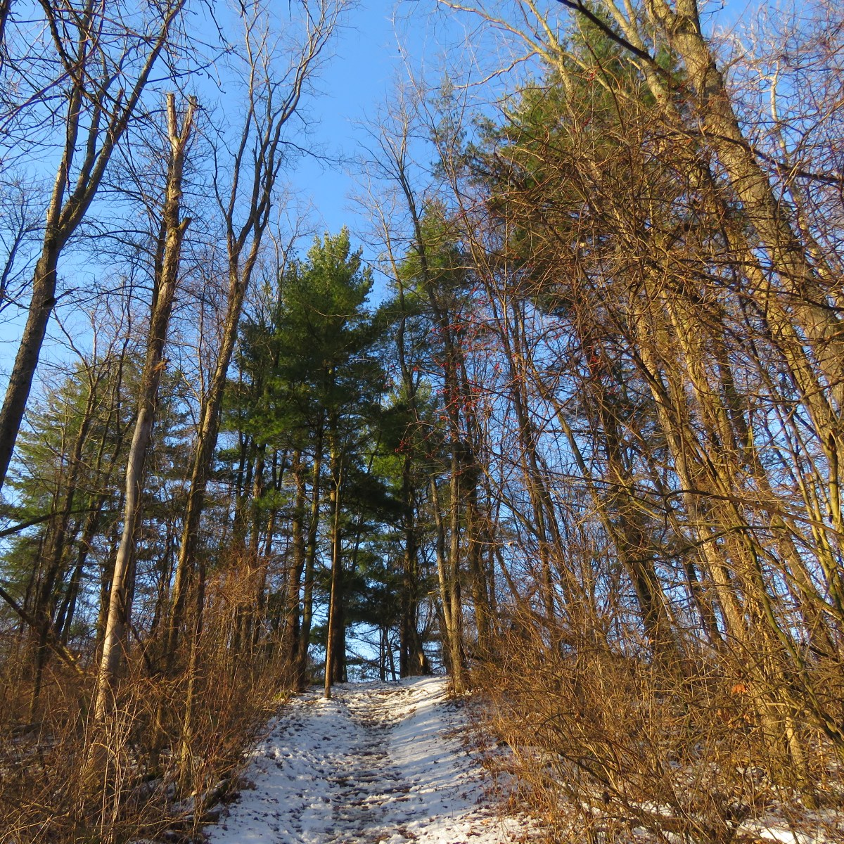 A snow-covered trail leads up a hill through the trees