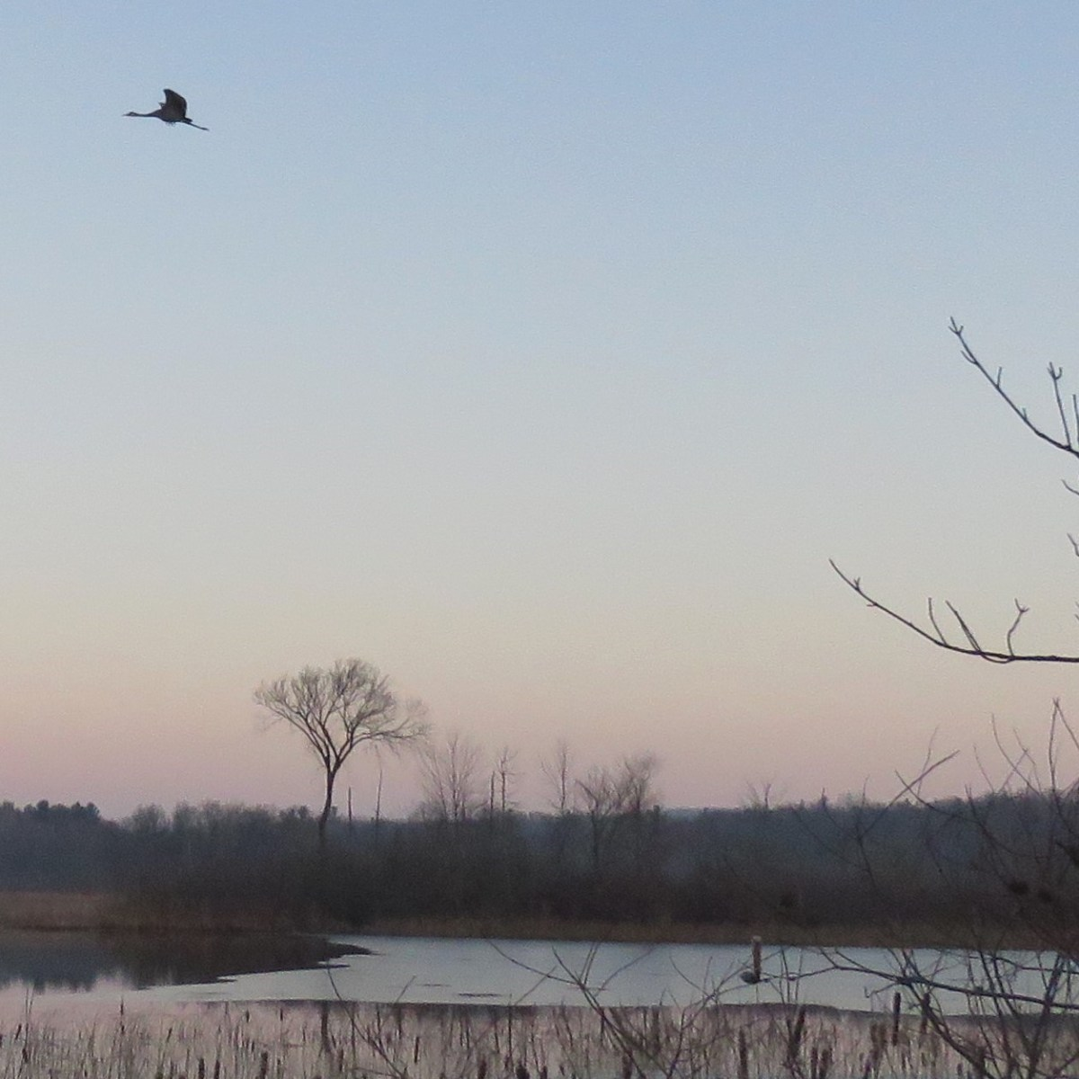 A Sandhill Crane flies high in the sky over a lake at dawn
