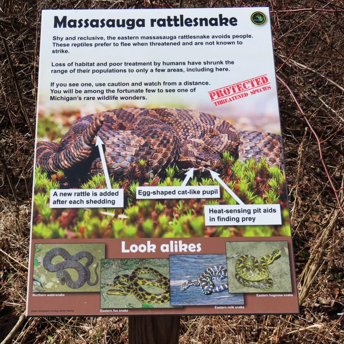 An outdoor interpretive sign detailing the Massasauga Rattlesnake