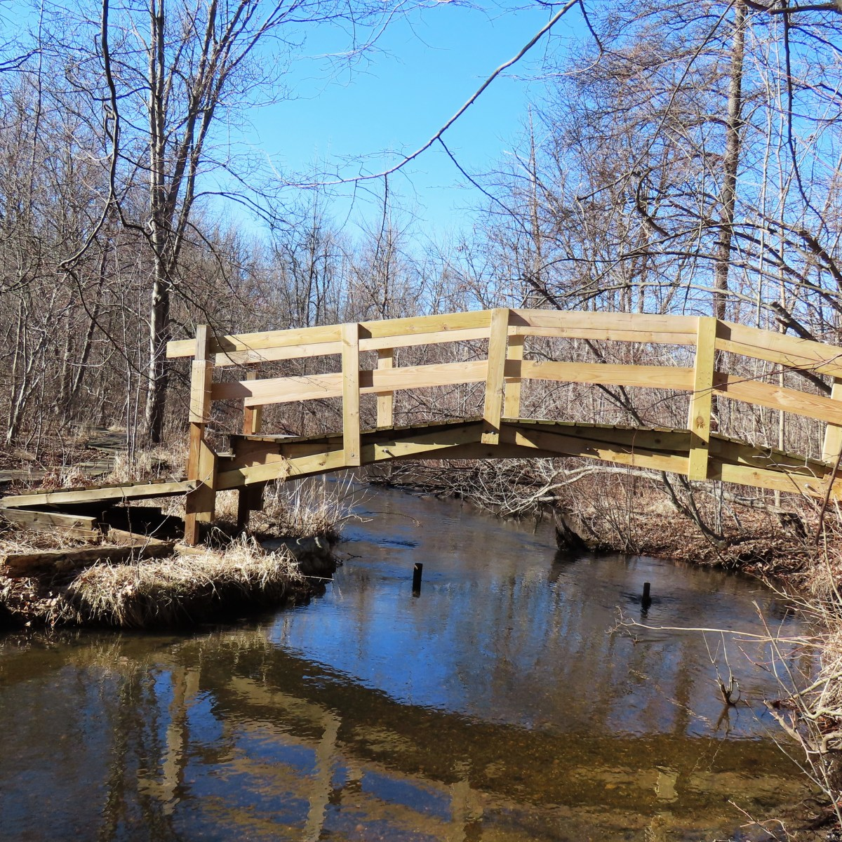 A wooden bridge over a slow-moving stream