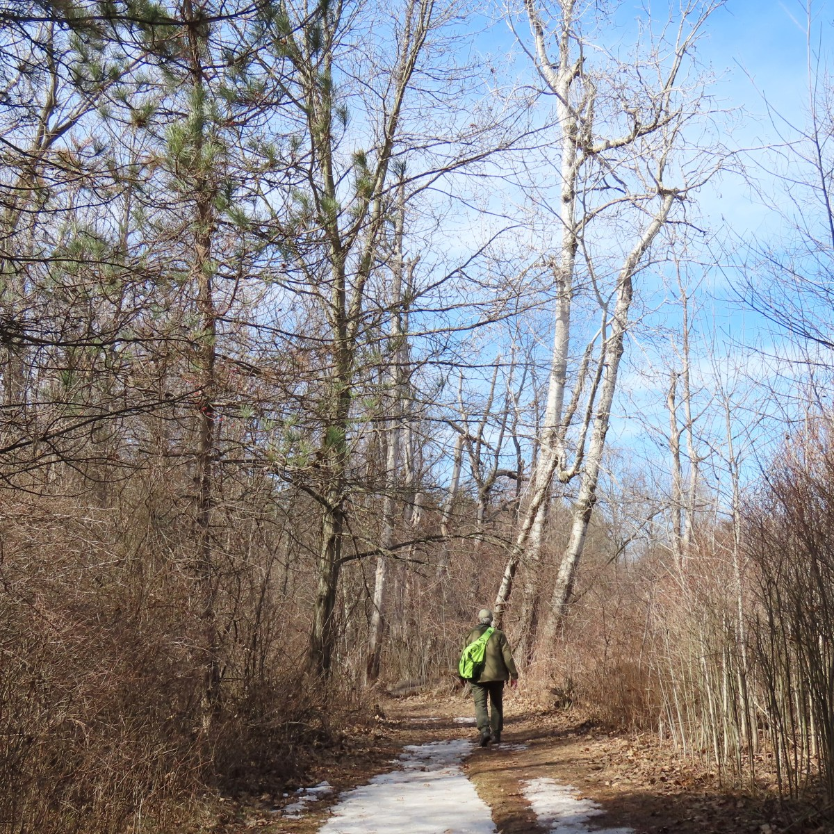 A man, with his back to the camera, hikes down a dirt path through the woods