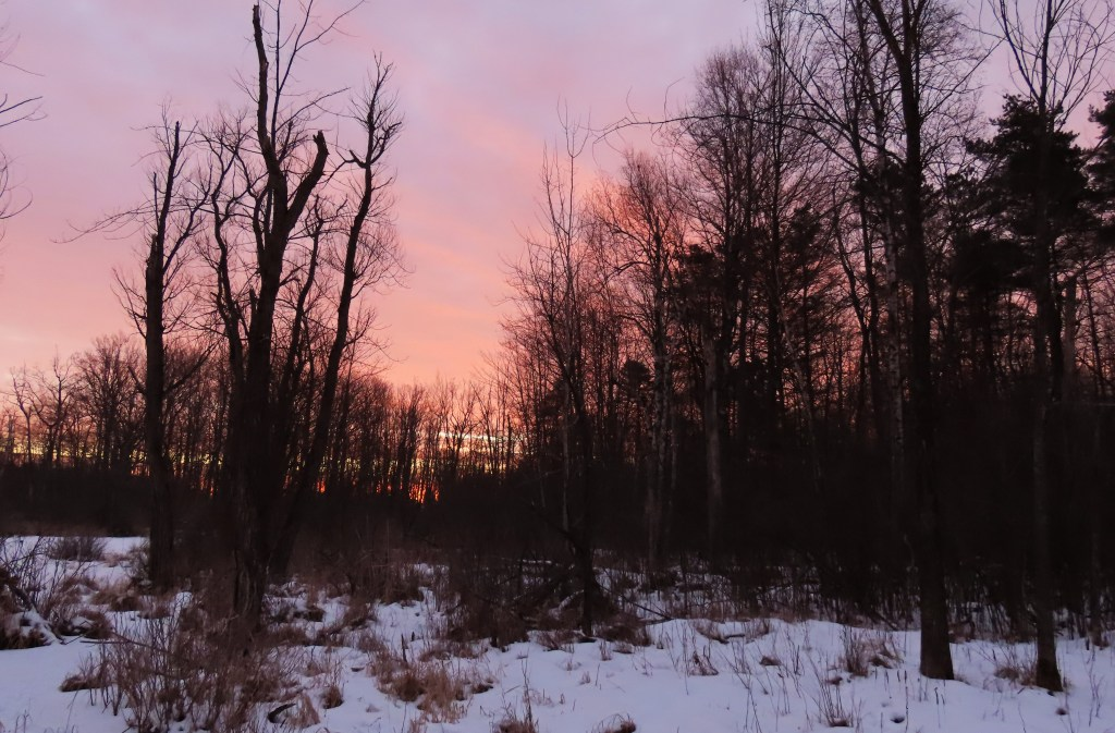 A pinkish-purple sky against a snow-covered wooded landscape