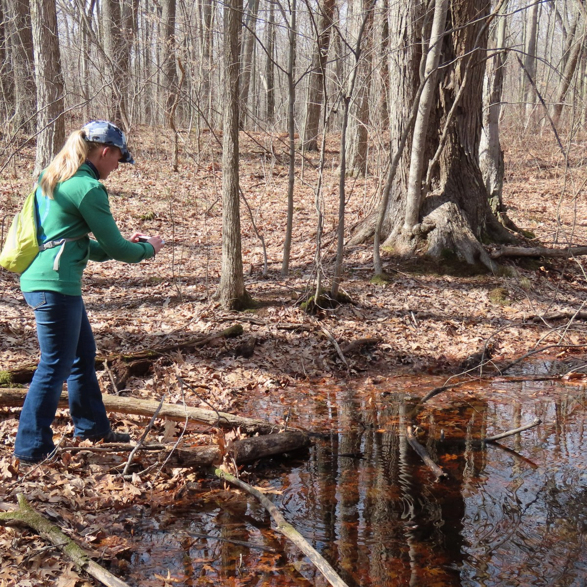 A woman stands at the edge of a vernal pond taking photos of wood frogs