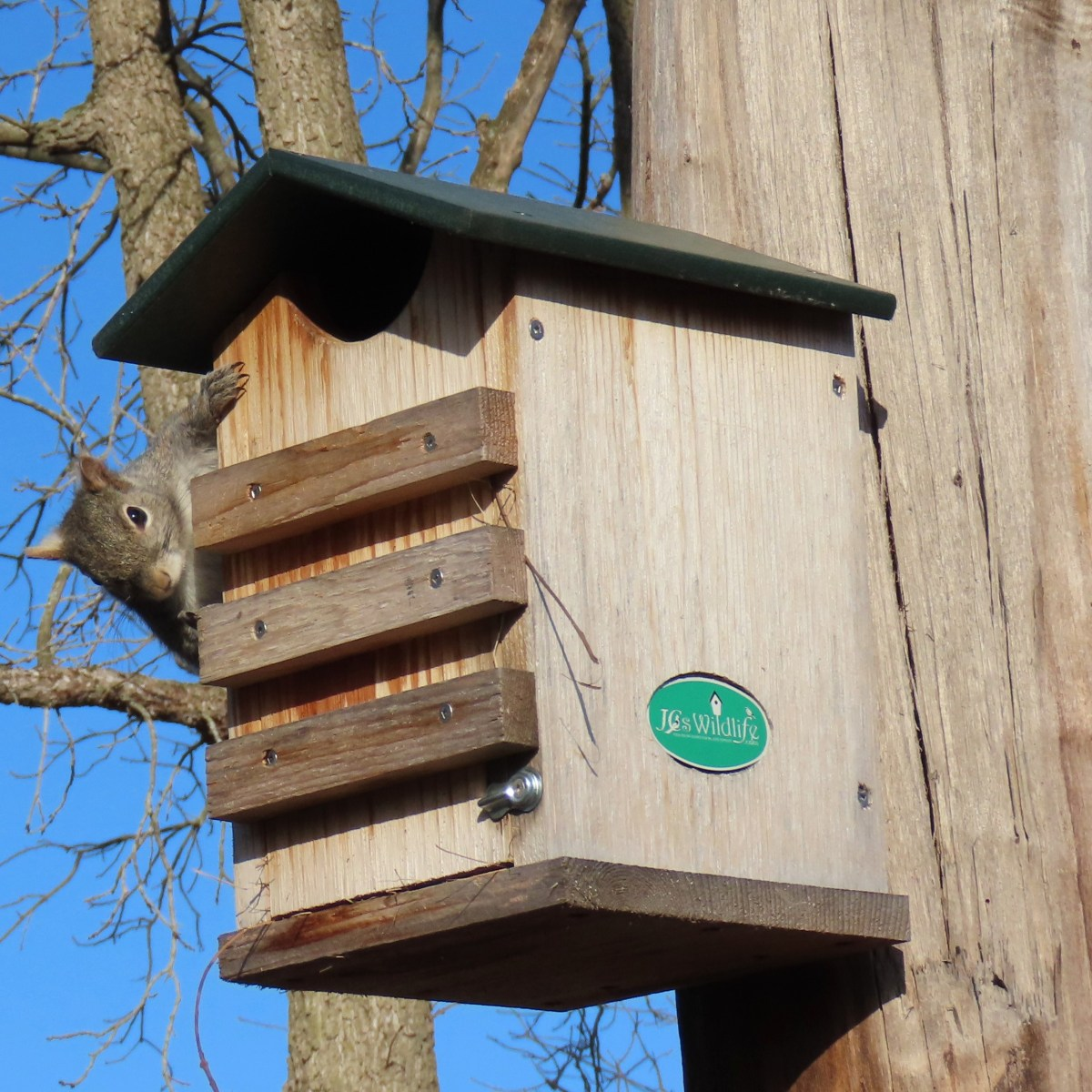 A squirrel climbs around the side of a nesting box that's attached to a tree