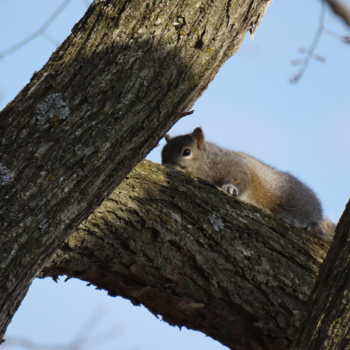 A squirrel rests on a tree branch