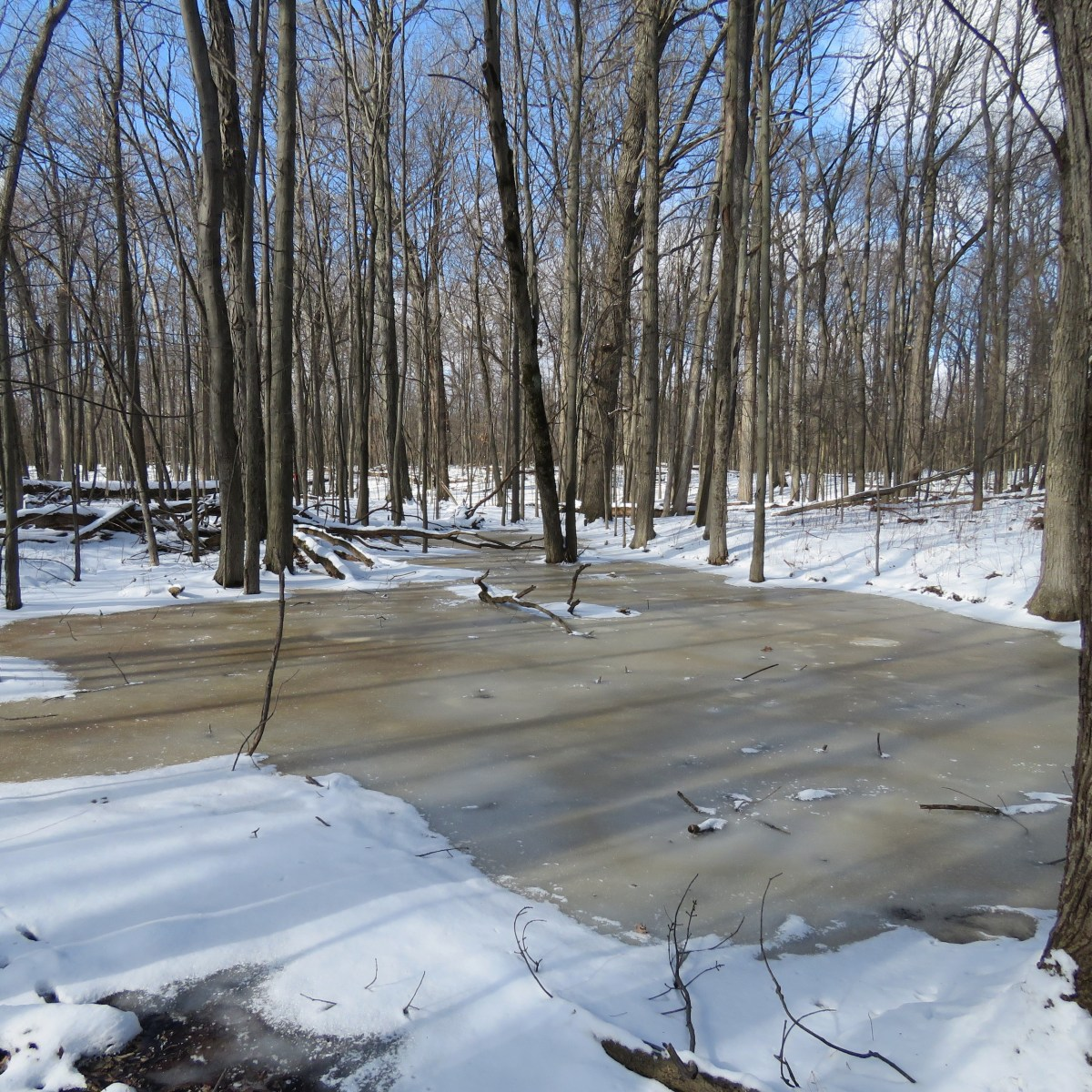 A frozen vernal pond in the winter
