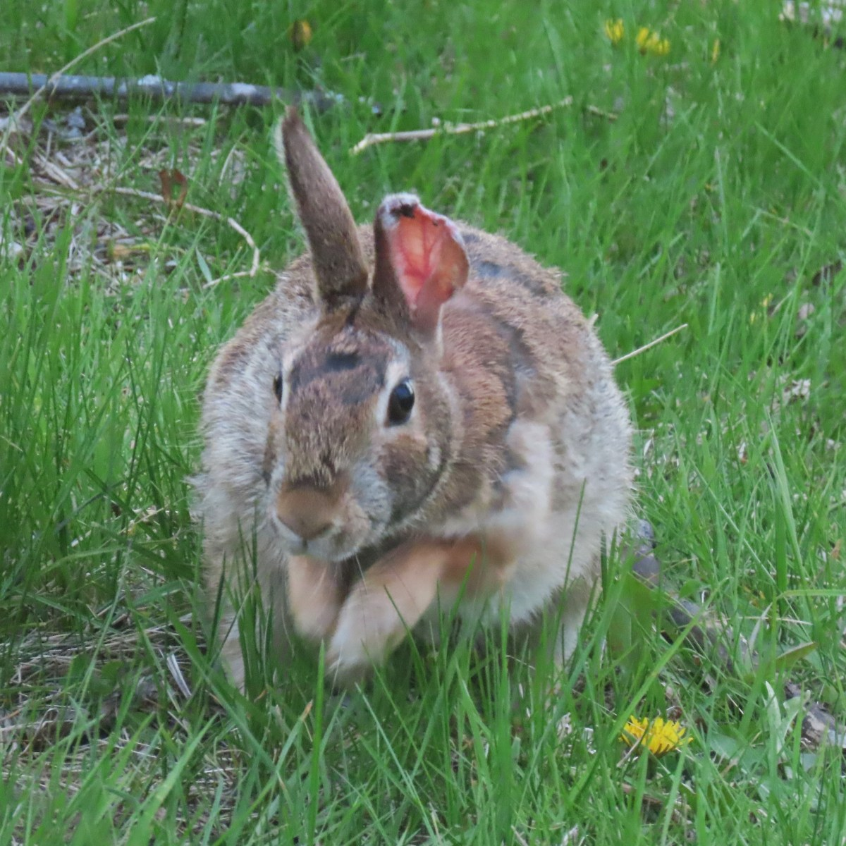 A rabbit sits in a grassy area