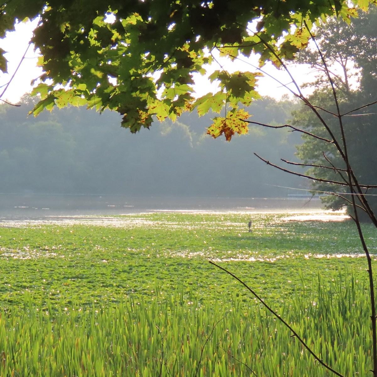 A hazy, but sunny, summer evening at a lake