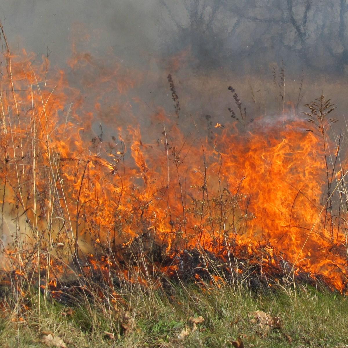 A prescribed fire burns in a meadow