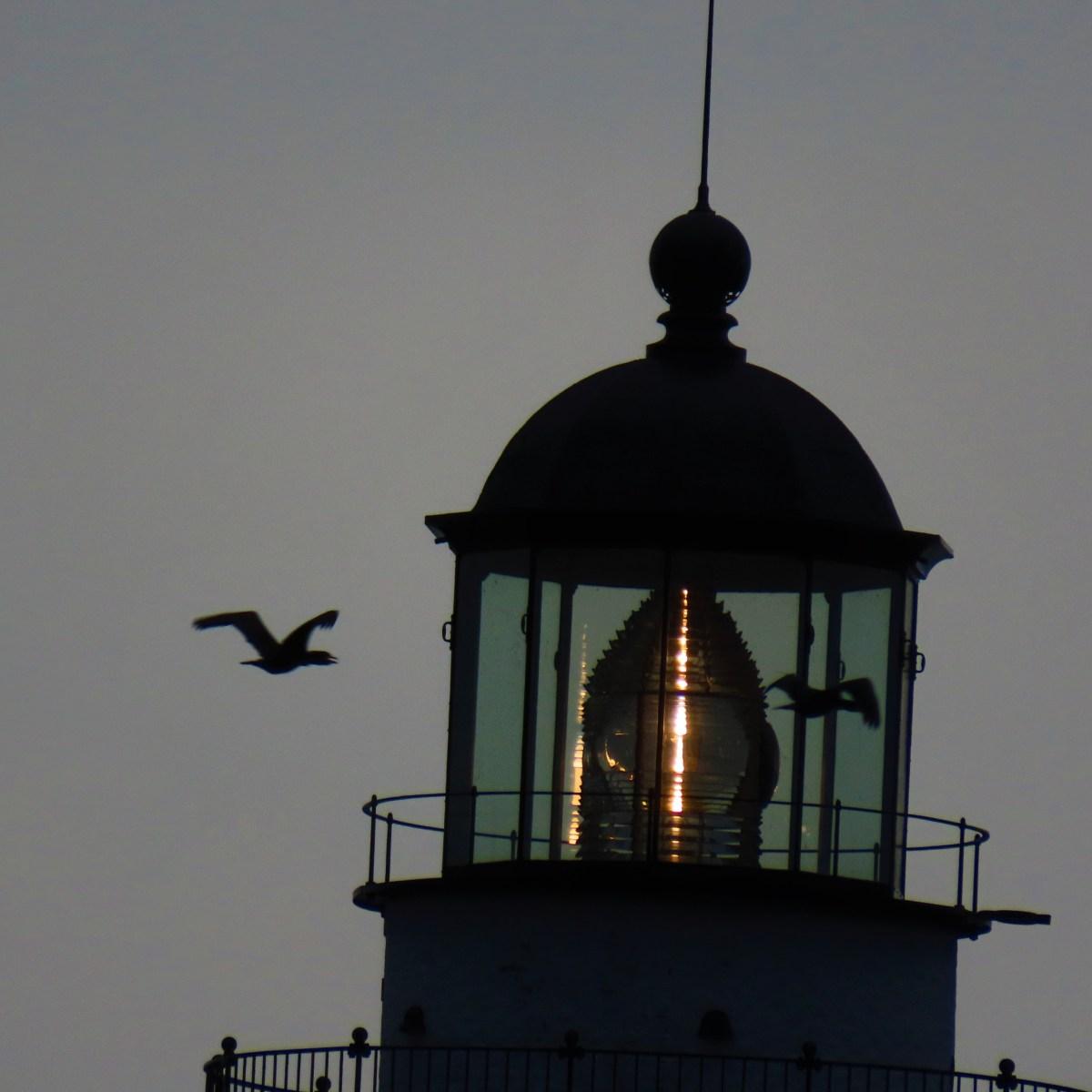 Cormorants flying past a lighthouse
