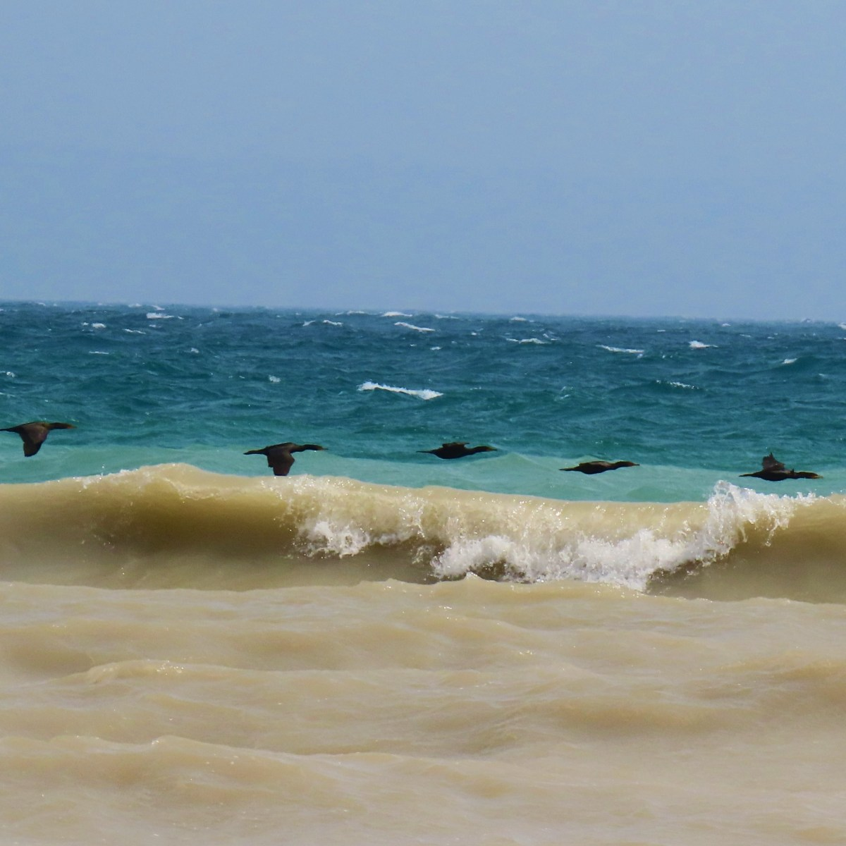 Cormorants flying low near water